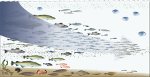 GIS for Fisheries and ocean industries