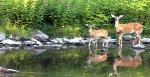 GIS for Wildlife Management