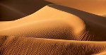 Dune Monitoring